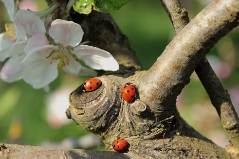 ladybug-722783